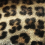 zhivotnoe-Animal fur textures (23)