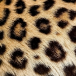 zhivotnoe-Animal fur textures (25)