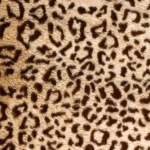 zhivotnoe-Animal fur textures (32)