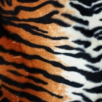 zhivotnoe-Animal fur textures (33)