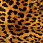 zhivotnoe-Animal fur textures (72)