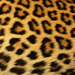 zhivotnoe-Animal fur textures (75)