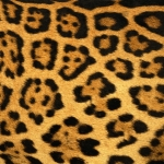 zhivotnoe-Animal fur textures (76)