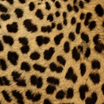 zhivotnoe-Animal fur textures (77)
