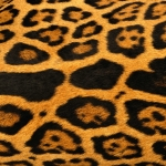 zhivotnoe-Animal fur textures (79)