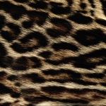 zhivotnoe-Animal fur textures (80)