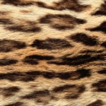 zhivotnoe-Animal fur textures (83)