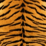 zhivotnoe-Animal fur textures (84)