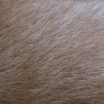 zhivotnoe-Animal fur textures (115)