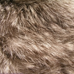 zhivotnoe-Animal fur textures (117)