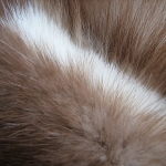 zhivotnoe-Animal fur textures (136)