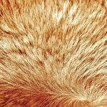 zhivotnoe-Animal fur textures (140)