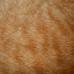 zhivotnoe-Animal fur textures (141)