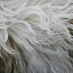 zhivotnoe-Animal fur textures (16)