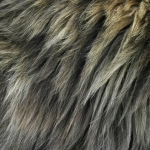 zhivotnoe-Animal fur textures (18)