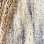 zhivotnoe-Animal fur textures (27)