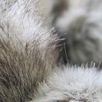 zhivotnoe-Animal fur textures (30)