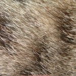 zhivotnoe-Animal fur textures (96)