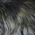 zhivotnoe-Animal fur textures (19)