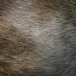 zhivotnoe-Animal fur textures (20)