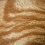 zhivotnoe-Animal fur textures (26)