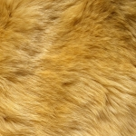 zhivotnoe-Animal fur textures (43)