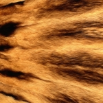 zhivotnoe-Animal fur textures (52)