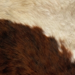 zhivotnoe-Animal fur textures (54)