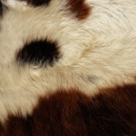zhivotnoe-Animal fur textures (57)