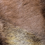 zhivotnoe-Animal fur textures (65)