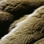 zhivotnoe-Animal fur textures (7)