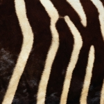 zhivotnoe-Animal fur textures (71)