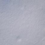 sneg (19)