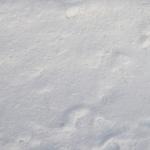 sneg (21)