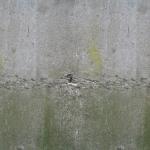 stariy-beton (11)