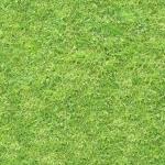 grass_13