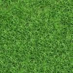 grass_15