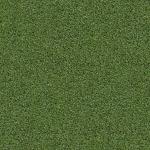 grass_4