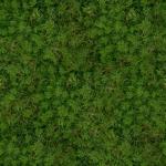 grass_5