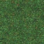 grass_6