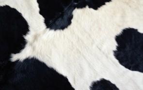 zhivotnoe-Animal fur textures (24)