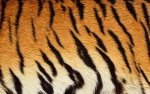 zhivotnoe-Animal fur textures (86)
