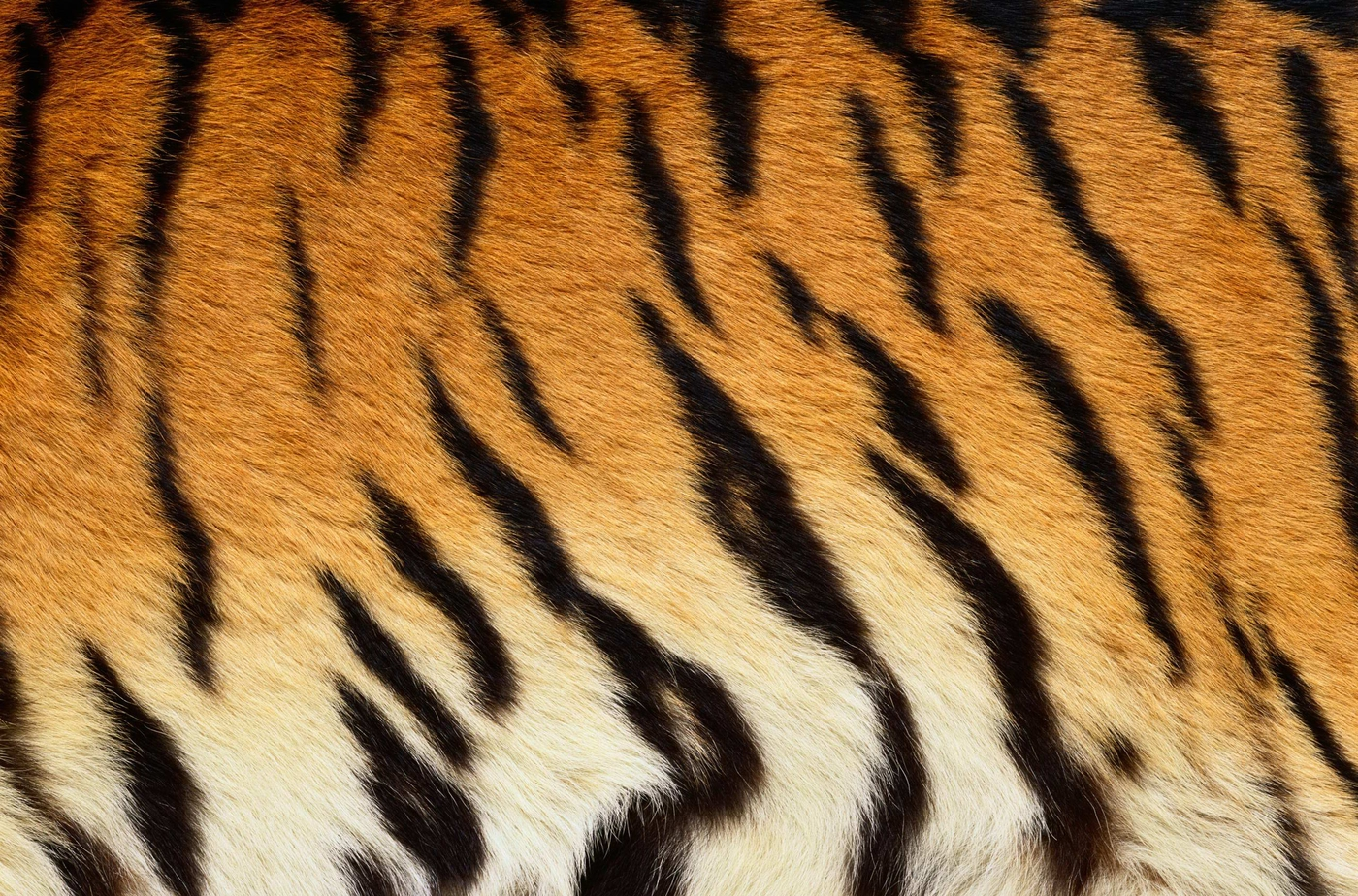 zhivotnoe-Animal fur textures (86)